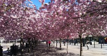 Relájese en el parque Kungsträdgården!
